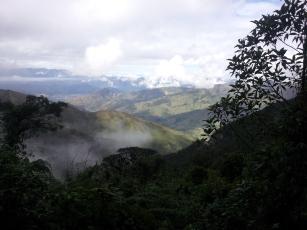 Cloud forest Podocarpus