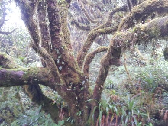 Beautiful hairy trees