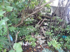 This is the rubbish around Nanny Cay, Tortola