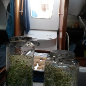 Sprouts and lots of baking aboard Ondular